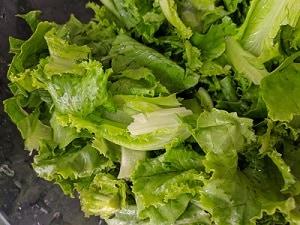 Lettuce Leaves for the salad