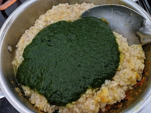 Adding spinach puree to the cooked brown rice and masoor dal